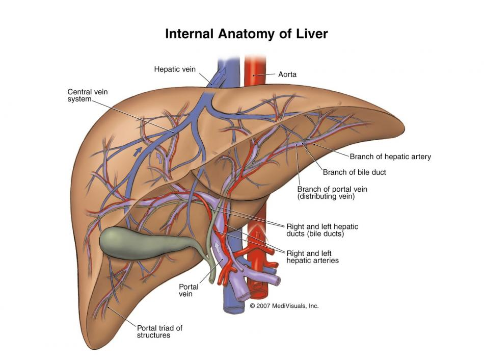 Gejala-Gejala Penyakit Liver